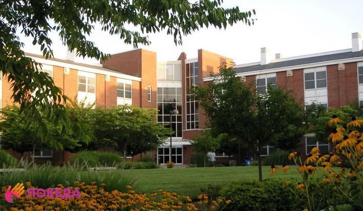 Университет Adelphi University