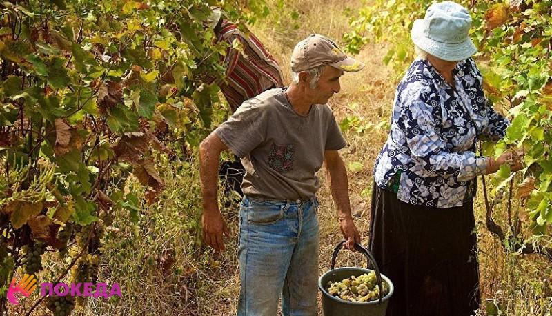 Сельское хозяйство в Армении
