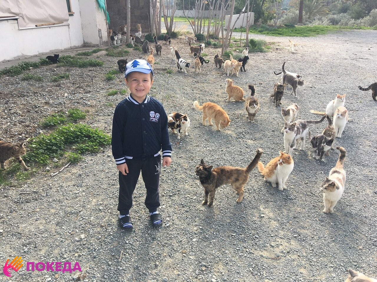 Кошки в Ларнаке