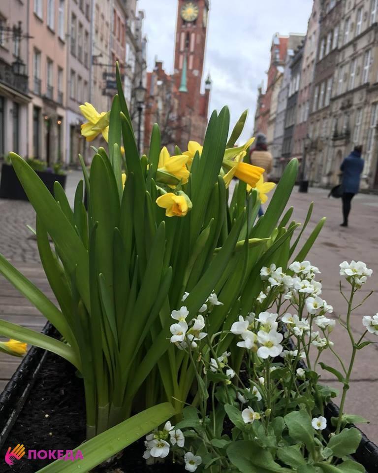 цветы в европе