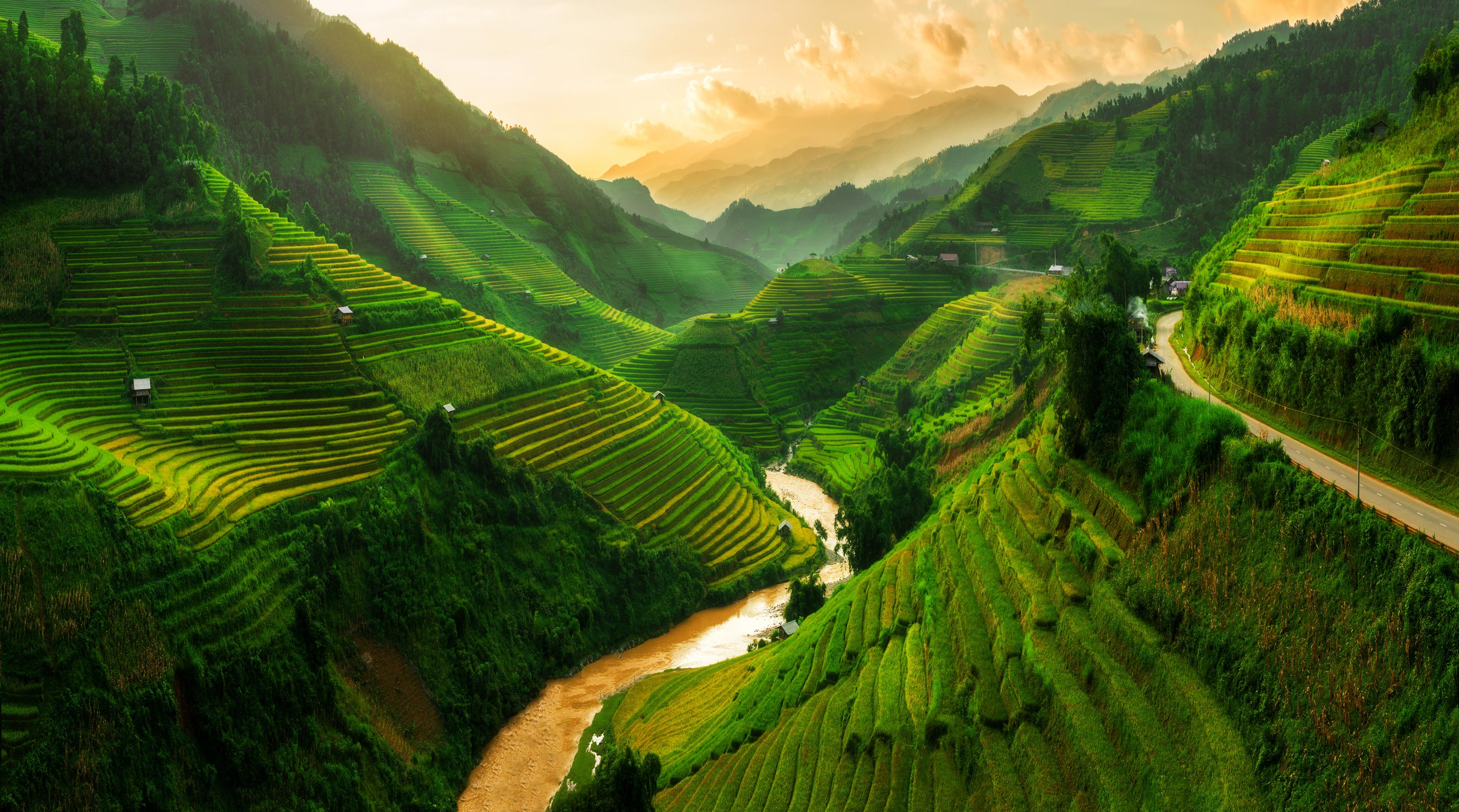 Рисовые поля во Вьетнаме, стране, где могут устроиться на работу иностранцы