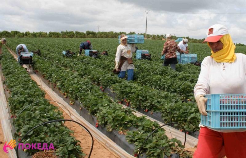 Сельское хозяйство в Марокко