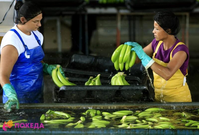 Сортировка бананов в Колумбии