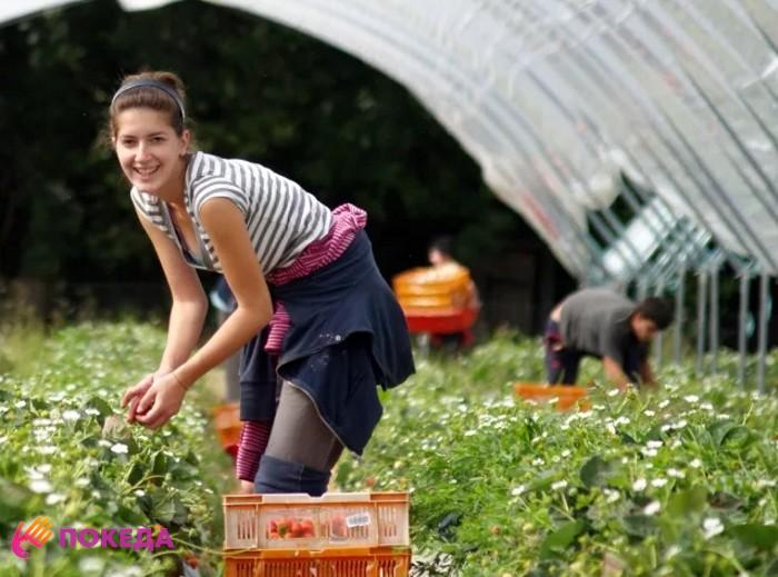Работа в сельском хозяйстве