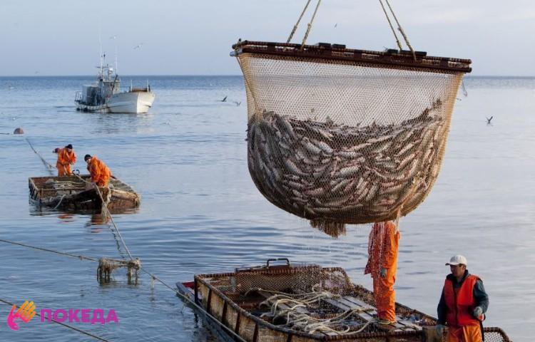 Рыболовство в Эстонии